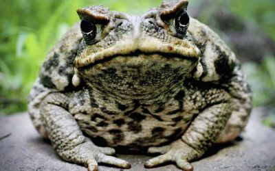 What Is Bufo Alvarius? Experience, Benefits & Side Effects